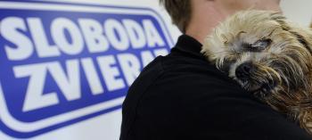 Útulky týraniu zvierat nezabránia, ale môžu pomôcť nájsť cestu k novým majiteľom