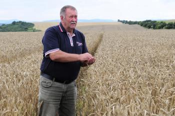 Agropodnikateľ Štefan Bačišin je s kvalitou pšenice spokojný