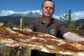 Lykožrútová kalamita ničí stromy v plnom rozsahu