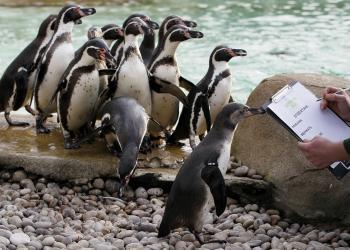 Úhyn tučniakov migrujúcich z Patagónie je varujúci. Poukazuje na dôsledky zmeny oceánskych prúdov s následnými výraznými zmenami počasia.