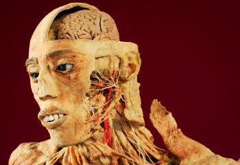 Tvár muža upravená procesom plastinácie