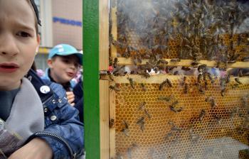 Rodeného včelára život včelstva neprestáva fascinovať
