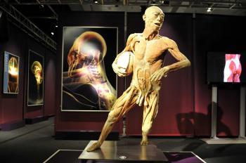 Výstavu The Human Body si možno pozrieť na bratislavskom výstavisku Incheba