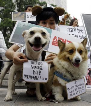 Juhokórejská aktivistka v rámci kampane proti jedeniu psieho mäsa