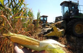 Predčasný zber kukurice na siláž kvôli suchu