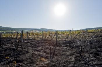 Vinohrad nad obcou Limbach zachvátil požiar. Na snímke zhorenisko po požiari