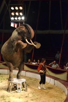 Obrovský slon počúvajúci na povel. Ponižuje to alebo ubližuje zvieraťu?