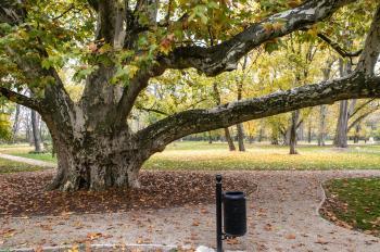 Strom roka v plnej jesennej kráse