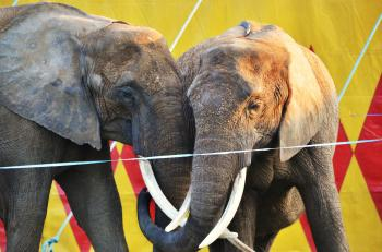 Zvieratá lákajú do cirkusov najmä najmenších