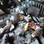 Situácia po požiari v dome Zväzzu odborov v Odese