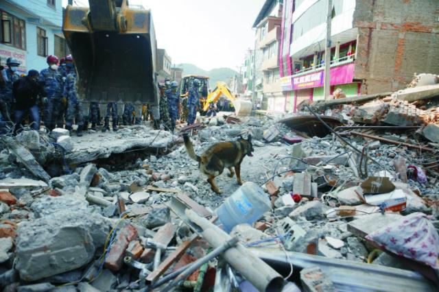 Na snímke záchranársky pes prehľadáva miesto zrútenej budovy po ďalšom zemetrasení v nepálskom meste Káthmandu 12. mája 2015