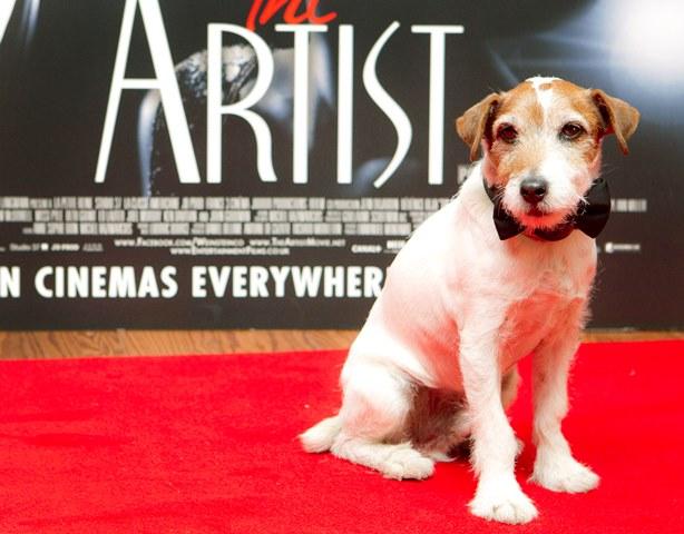 Na snímke z roku 2012 pes menom Uggie pózuje na červenom koberci pred premietaním filmu The Artist (Umelec) v Londýne