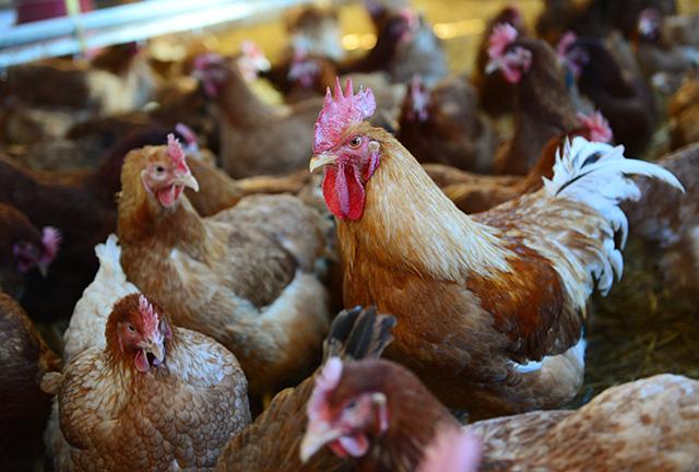 ĽSNS chce zrušiť pokuty za chov neregistrovaných hospodárskych zvierat -  Hlavné správy 94c77662c17