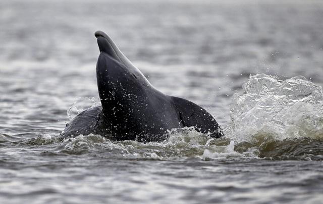 Delfín. Ilustračné foto