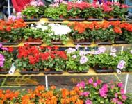 Na snímke vystavované kvety