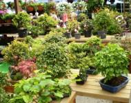 Na snímke vystavované rastliny