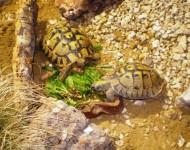 Na snímke korytnačky