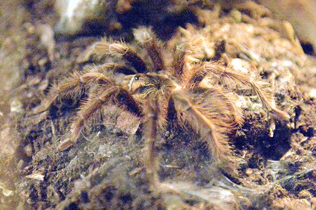 výstava Fascinujúci svet pavúkov a škorpiónov