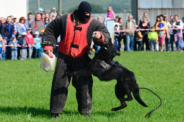 Na ilustračnej snímke psovod vojenskej polície