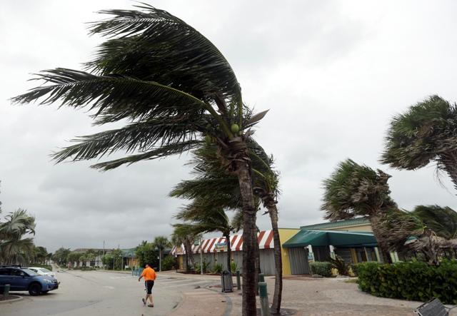 Na snímke palma v poryvoch vetra pred príchodom hurikánu Matthew na Vero Beach na Floride