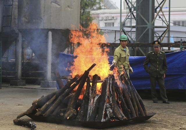 Zhabanú slonovinu pália vojaci v Hanoji 12. novembra 2016