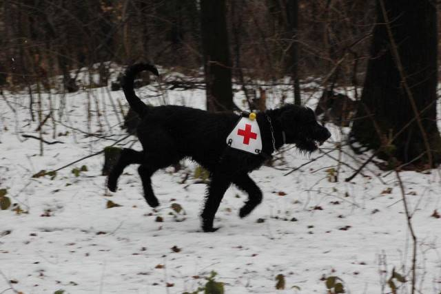 Na snímke jeden zo záchranných psov