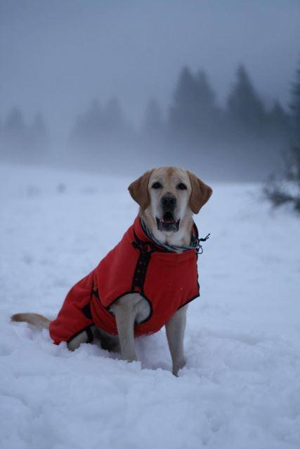 Na snímke jeden to záchranných psov