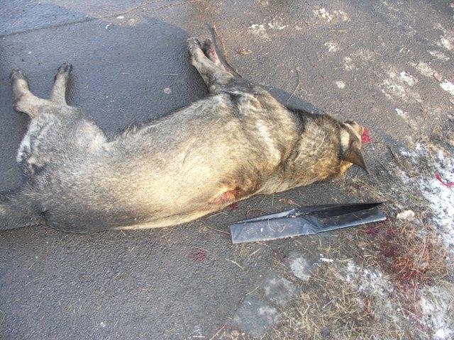 Na snímke zastrelený pes na sídlisku v Lučenci