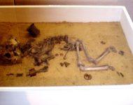Archeologická výstava pamiatok doby bronzovej v Ponitrianskom múzeu v Nitre