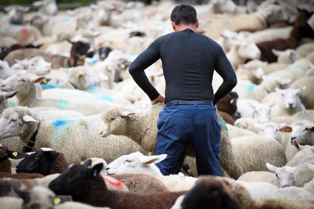 e5d8f71003e Chov oviec v SR a ČR za priemerom EÚ a aj sveta výrazne zaostáva - Hlavné  správy