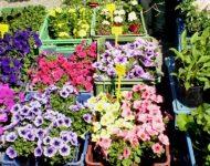 Na snímke kvety