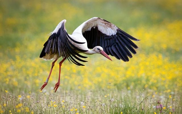 9bbf7915221d Jesenná migrácia vtáctva na Slovensku vrcholí - Hlavné správy