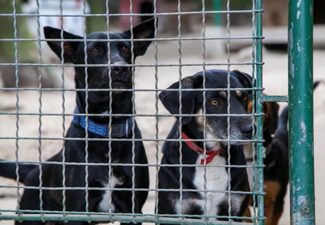 Adoptovať zvieratá z útulkov z celého Slovenska bude možné tento aj ... 041abad6407