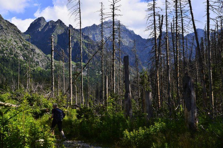 príroda, lesy, ochrana