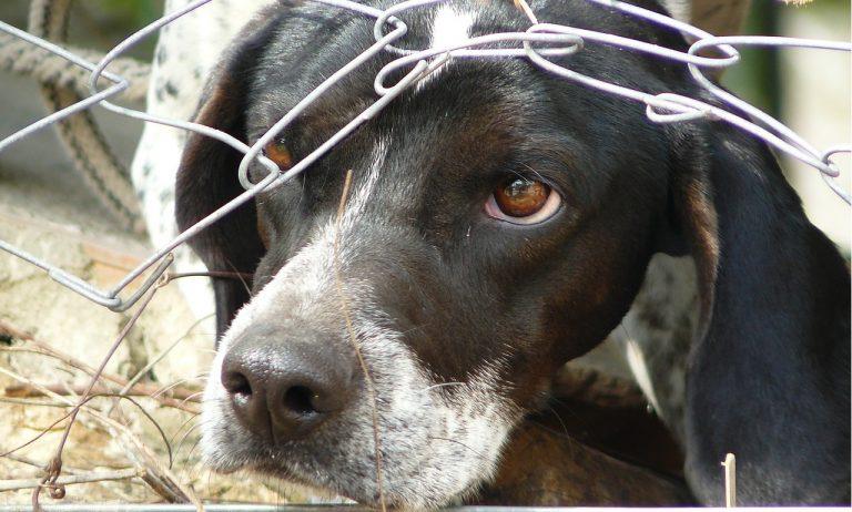 týranie pes zviera