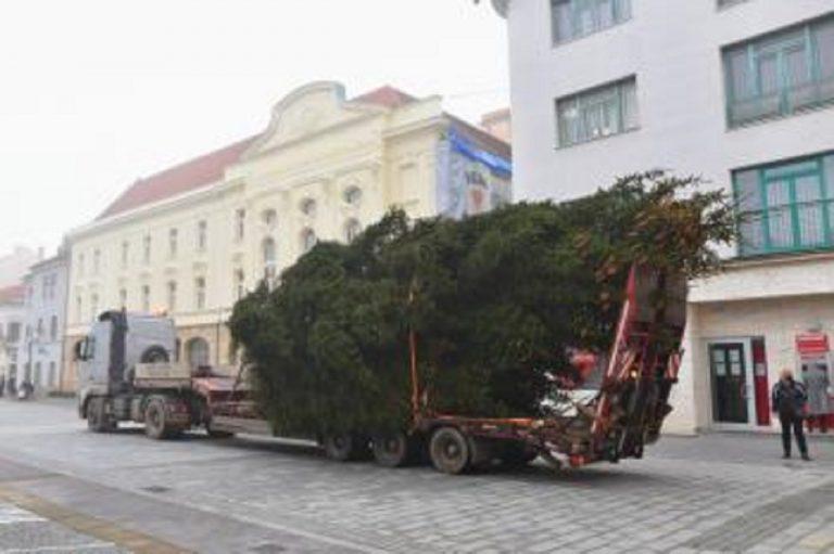 vianočný strom