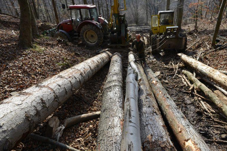 ťažba lesného porastu