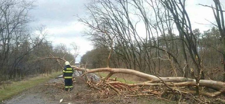 hasič, popadané stromy