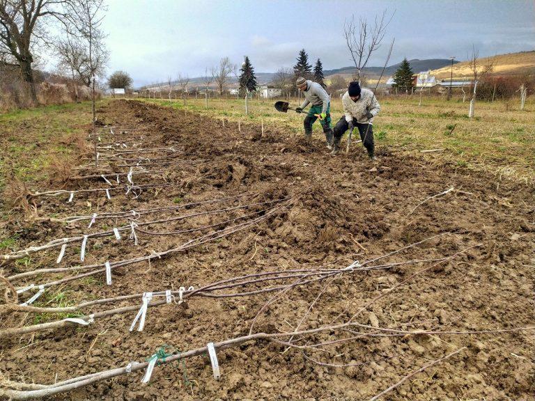 Moravské Lieskové výsadba stromčeky ovocné