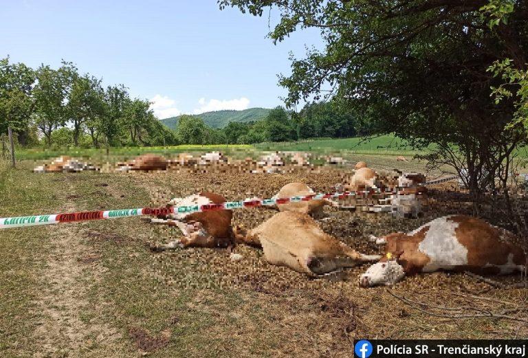 uhynutý hovädzí dobytok