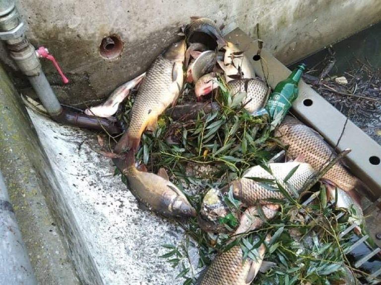 uhynuli ryby, Hron