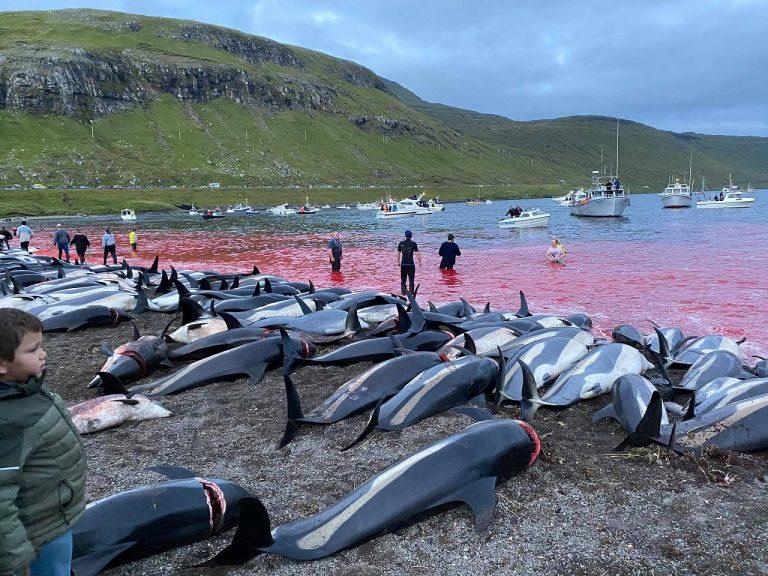 delfiny faerske ostrovy
