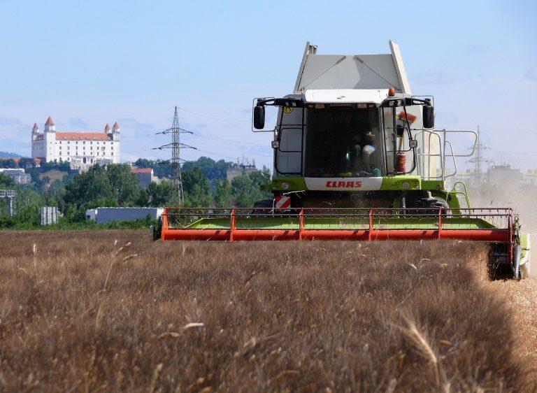 žatva pšenica