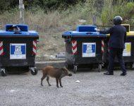 Diviaky v uliciach Ríma