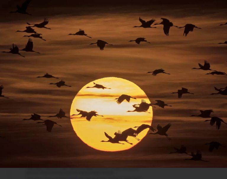 smrť vtákov