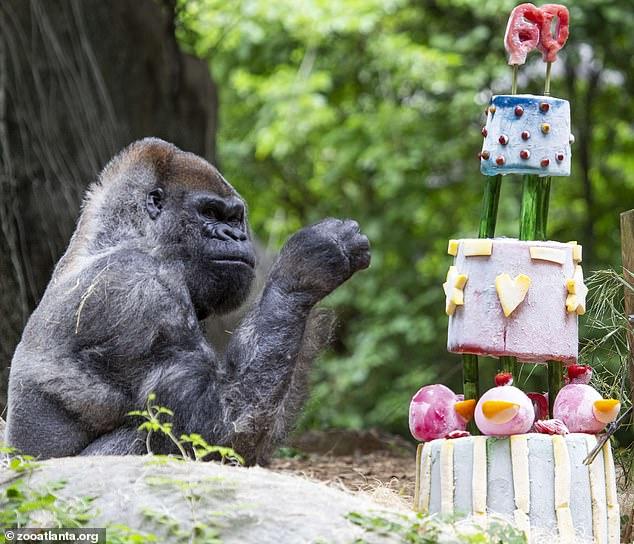 Gorila s tortou